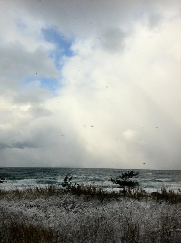海雪鳥.jpg